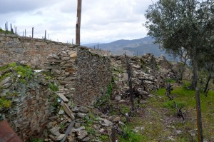 Up close view of the walls that have supported the hillside vineyards for hundreds of years.
