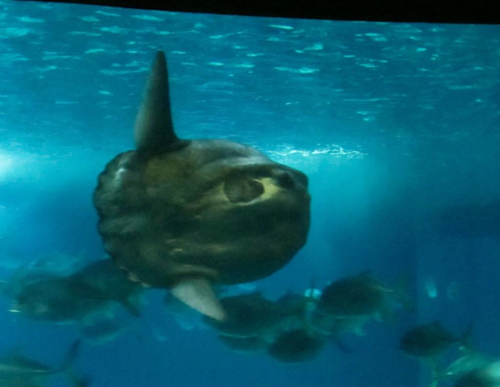 The sunfish!