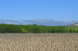 Spain - SB and Rioja 108